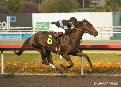 Shared Belief Horse Of Meet In Final Media Poll http://t.co/DeLewrirWT