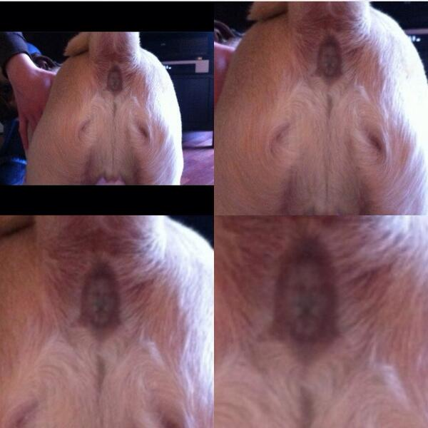 Image result for jesus in dogs ass