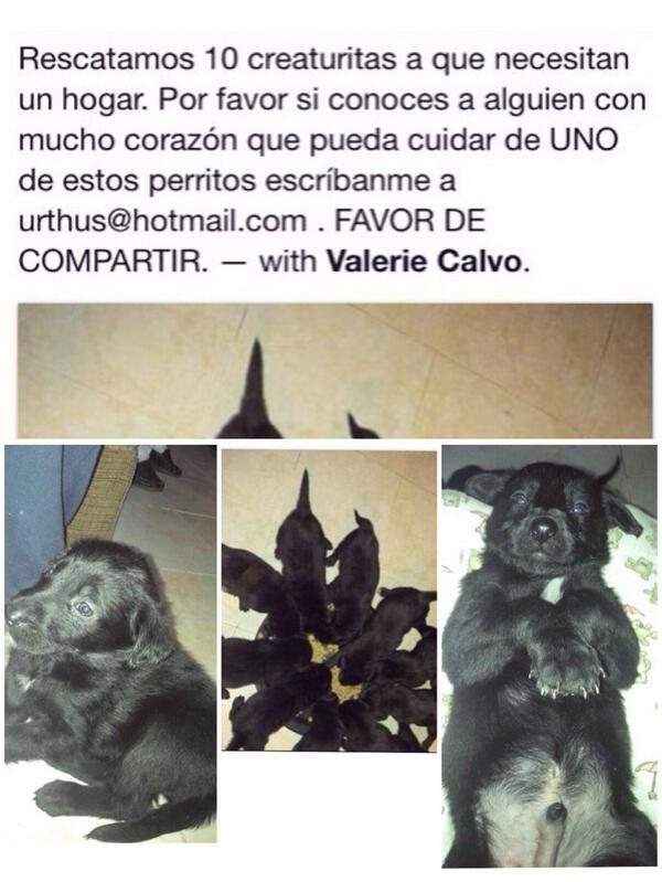 Hay 10 perritos que necesitan de tu ayuda @en_ladelvalle plis RT http://t.co/wWslwN3uxF