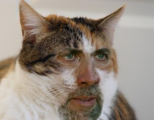 "Animal Edits on Twitter: ""-Kitalous Cage http://t.co/oM2f5iCSGw""-"