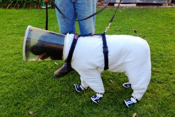 OMG RT @TreeHugger: Beekeeping dog in 'astronaut' suit detects infected hives by smell http://t.co/6ZMltAyuHb http://t.co/TKgvKKNgO0