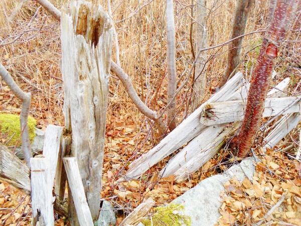 Old fallen down rotted fences-love em- #weatheredwood #abandonedplaces #autumnpic.twitter.com/SuwUXzTkle