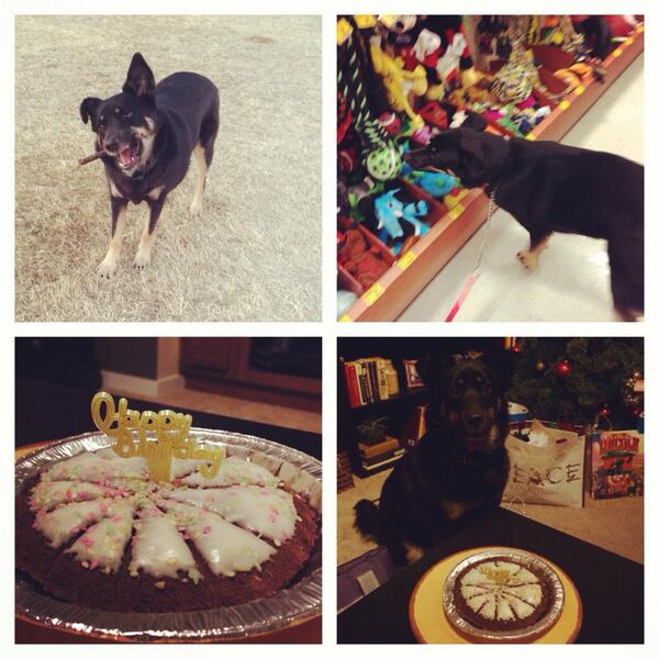 Laina On Twitter Luna Had A Great 1st Birthday She Went To The Dog Park And Then PetSmart For Toy Cake