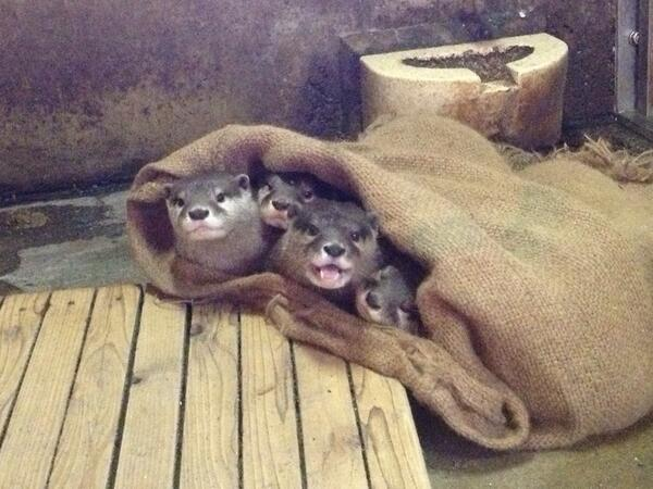 おはようございます。今朝も寒いですね。この季節、園内では、動物たちが体調を崩さないよう、室内との出入りを自由にしたり、暖かい屋内展示にするなどの対策をとっています。ご不便おかけしますが、ご了承ください。(加) #chibazoo pic.twitter.com/dfLt8nqqbL