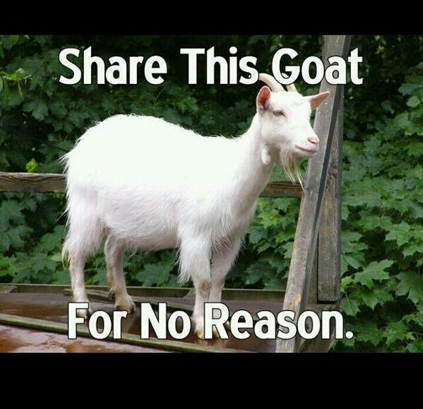 @DanBilzerian it would be rude of me not to share #goatsunday