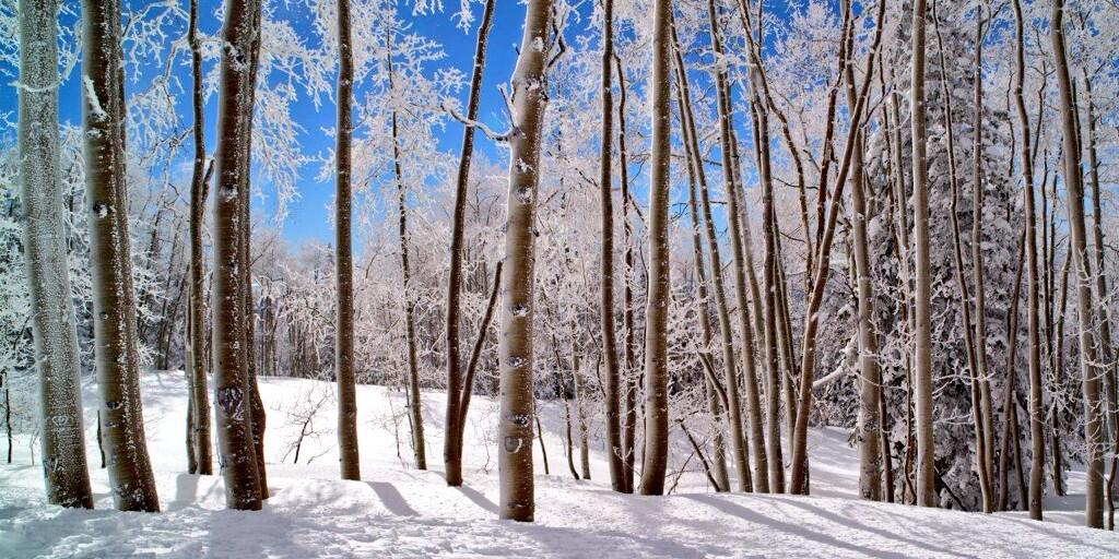 Twitter / Jensen_Photo: #steamboat Crystalline Forest ...