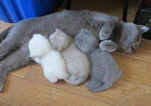 50 коттенков серого http://t.co/8ezqrWHhuP
