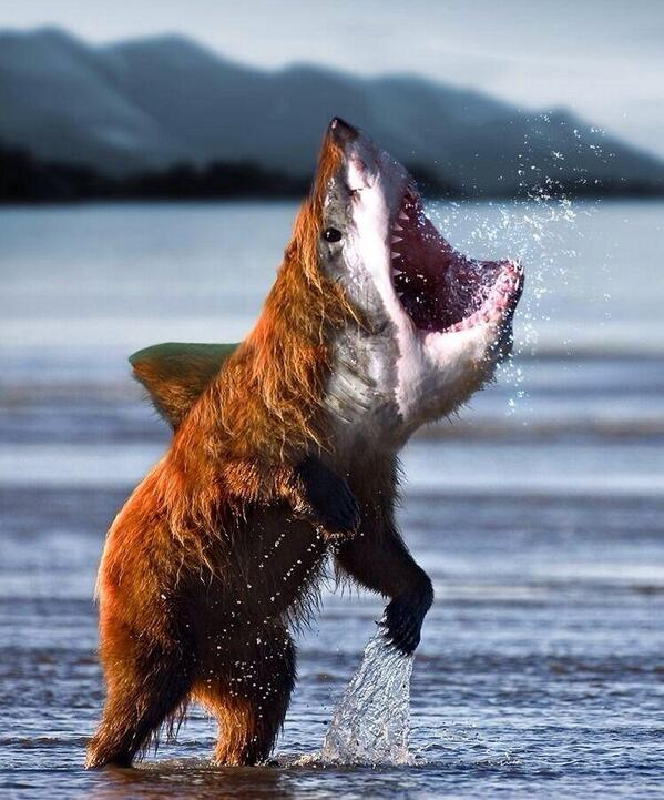 fotomontaggi divertenti di animali