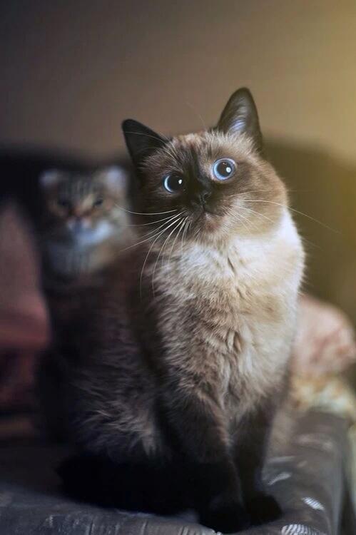 Cats!!! - Magazine cover