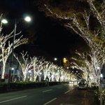 Image for the Tweet beginning: LED65万個の輝きに包まれた11年の開催が最後になると思われた、表参道ケヤキ並木のクリスマスイルミネーションが、ことしは企業の協力により復活!