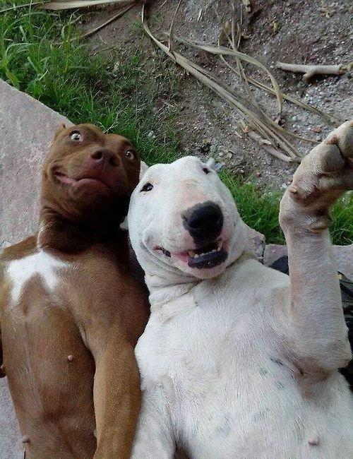 """@tumour: It's pointless buying your dog a camera, they said. He'll never be able to operate it, they said. http://t.co/vtKkOKulhf"" SELFIE"