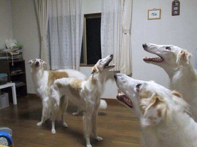 the dogs fuckin found out about religion, call the cops. no not the regular cops http://t.co/Pf73O2TSgO