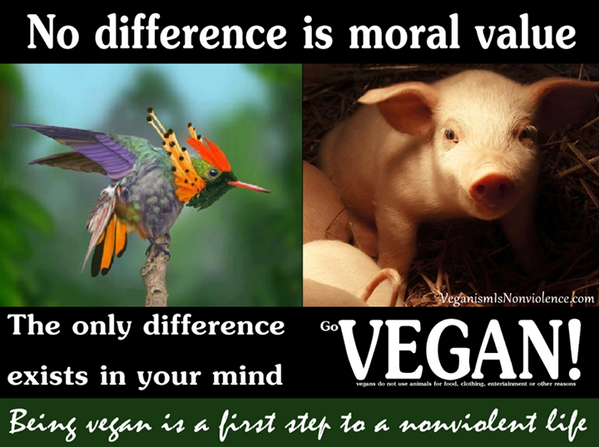 moral differences Start studying 4 four major approaches to moral differences learn vocabulary, terms, and more with flashcards, games, and other study tools.