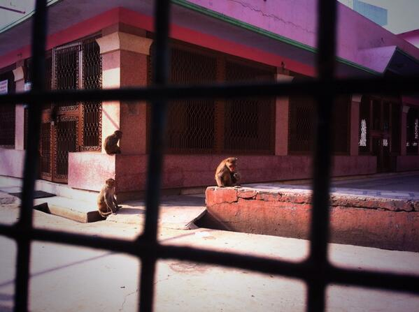 You haven't truly lived till monkeys snatch ur glasses off ur face. O hai #vrindavan #livingindia #blindasabat #fb http://t.co/jF96TUy6gI
