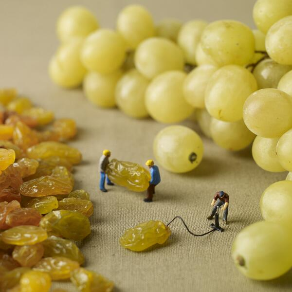 Inflating raisins http://t.co/KlwFrFk9gL