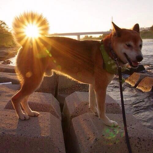 [犬]こんな神々しいお尻はじめて見たwwwwwwwwwwwwwww[2016年8月26日]