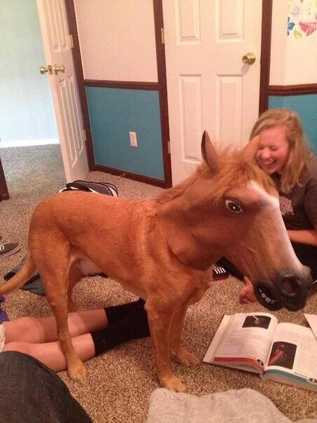 Собаконь http://t.co/QwnqOh26x2