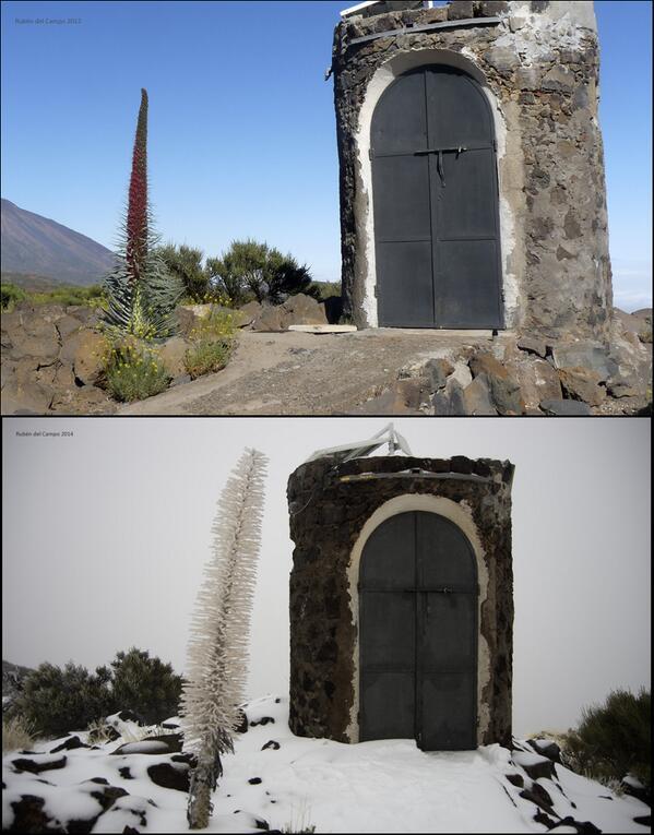 ¿Ibas a subir?  Ya NO HAY nieve en Cañadas Teide. Pásalo. Suspendemos operativo especial. 342 y 348 rodarán normal. http://t.co/oALM66dMJv