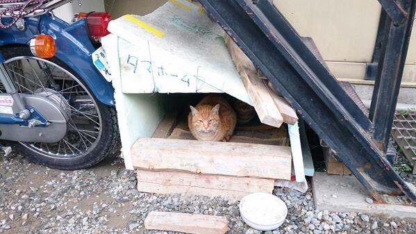 この前トラックを借りに行った工務店の猫小屋。ツボったのでハイテンションで撮ってた。 pic.twitter.com/CfTjehChZy