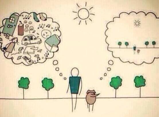 Be more dog. http://t.co/Ej4NTzJspk