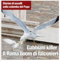 """""""Gabbiani killer: stormo di uccelli sulla colomba del Papa. A Roma boom di falconieri""""."""