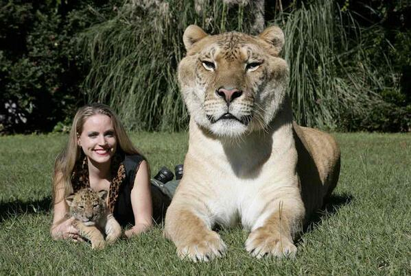 largest tiger ever recorded guinness book photo8