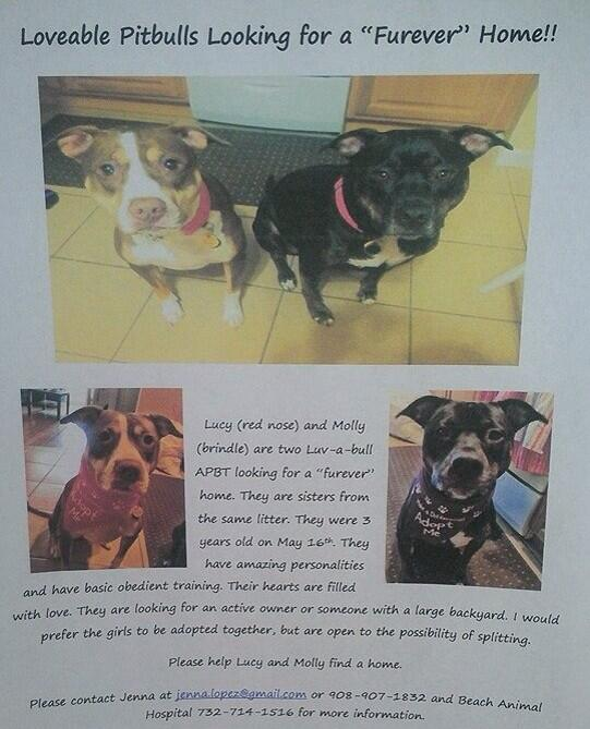 #Adopt Lucy & Mary. #NJ #dog #pitbull call Beach Animal Hospital 732-714-1516 if interested. http://t.co/4n6tsY7DeW