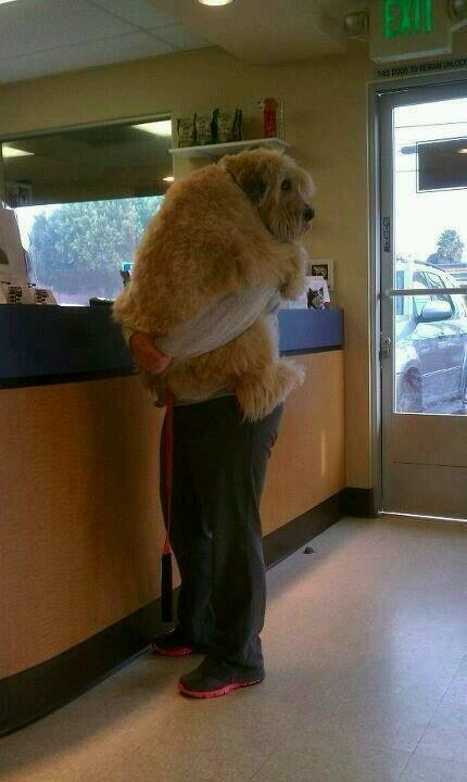 Someone is scared of the vet. http://t.co/QL8maH6x5O