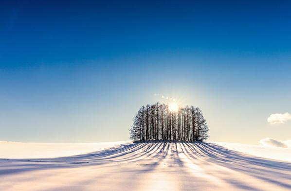Sunrise Trees- Biei,Hokkaido,Japan. http://t.co/TQfaZ7scxE