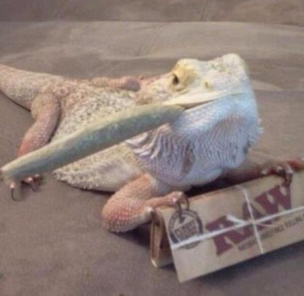 Mariguana. http://t.co/5zFI1tVUJ0