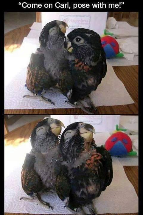 Haha nice pose #funnybirds http://t.co/S8AtjPhRze
