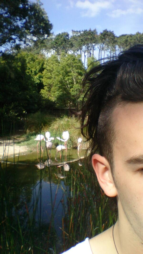 #flamingoselfie! http://t.co/XBd2dRSu6t