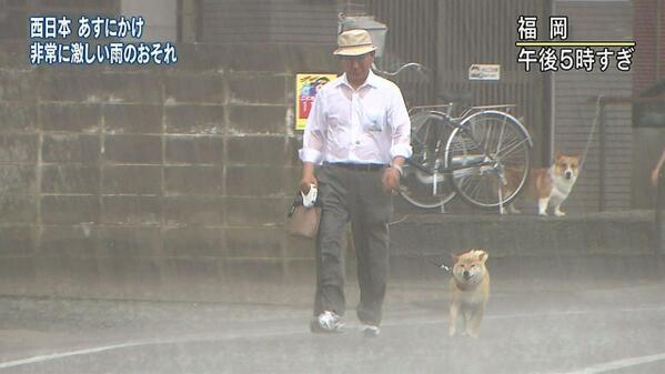 柴犬の画像検索してたら勇ましすぎるお父さんと柴犬と、それを見てビビる犬の画像出てきた。 pic.twitter.com/X3YufxyFf0