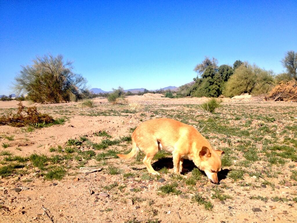Twitter / alizasherman: Chihuahua in Arizona. I think ...