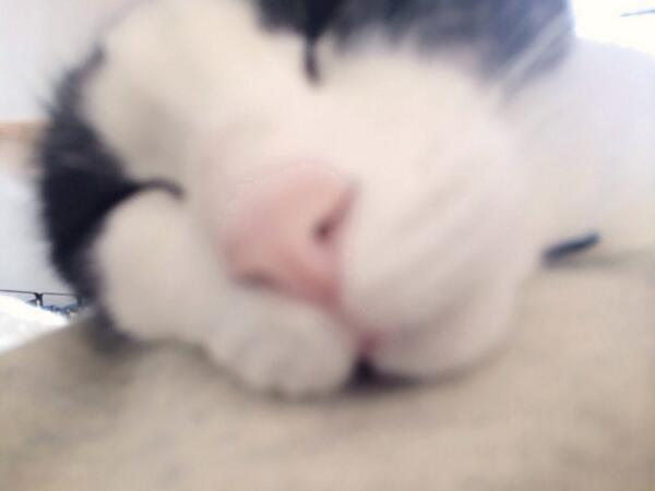 爆睡してらっしゃる pic.twitter.com/7FvYMB8u8P