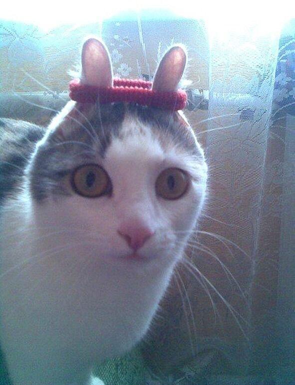 猫うさぎ化計画 pic.twitter.com/2EmNZoKBdH