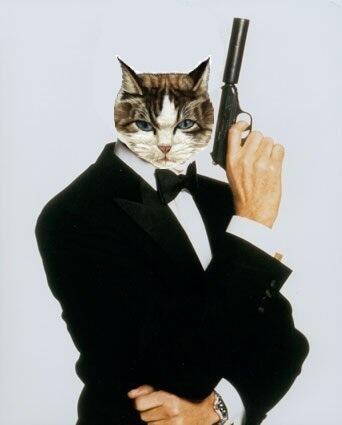 сбережет кот спецагент картинки лишай относят