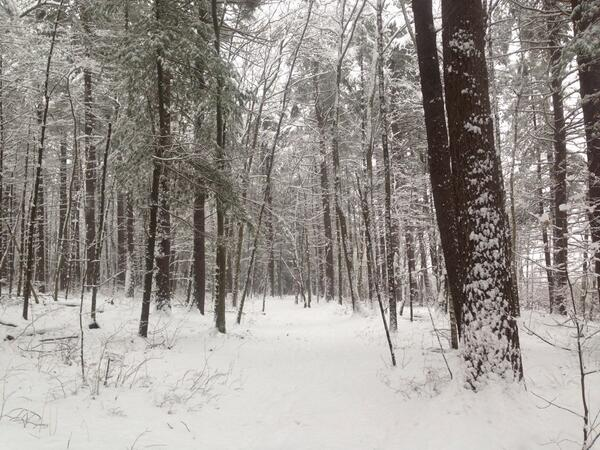 Nice out here. Not much base but good snow as more falls. 31 deg calm. Adams Pond Trail @LondonderryNH http://t.co/xgv64QylBP