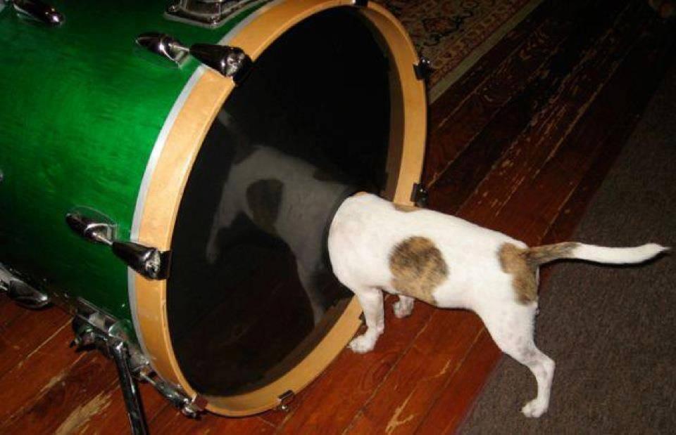 Прикольные картинки барабанами, открытка