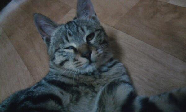 내 카메라를 옆집사는 동생한테 맞겨 뒀더니 지 셀카가 난무한다.  고양이가 아닌 내가 봐도 이년은 오지게 못생겼다. http://t.co/QFdQTEBb3e