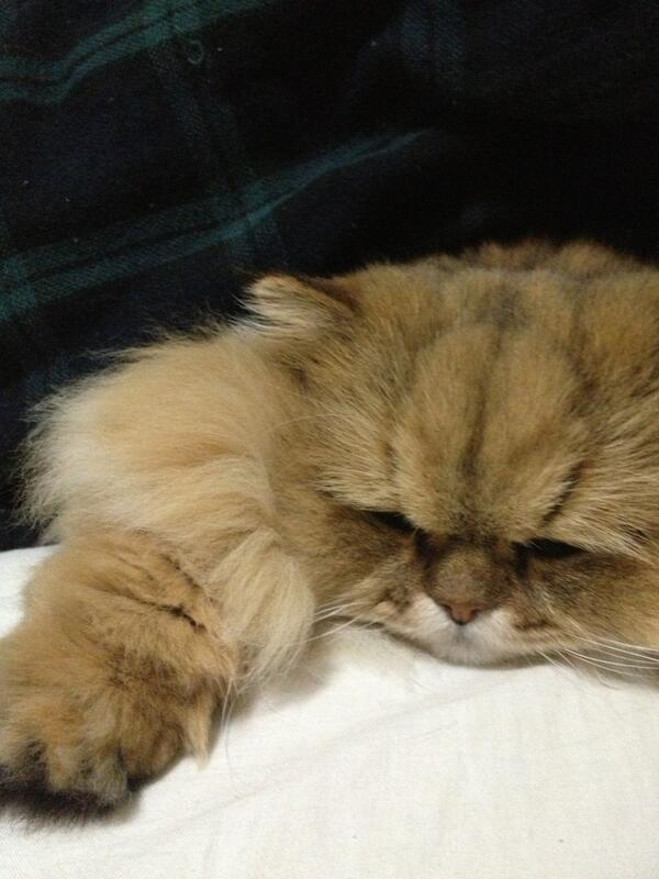 一緒に横になったのでおふとんをかけたら眠そうな顔。みなさまおやすみなさいませ。@嫁 pic.twitter.com/qcKfEIJ3nl