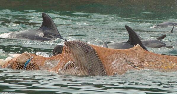 """@lorylady: Too sad for words.  RT @TheMiddleWay: If this was you, wouldn't you hope someone cared? #tweet4taiji http://t.co/E7PQmpyVip"""