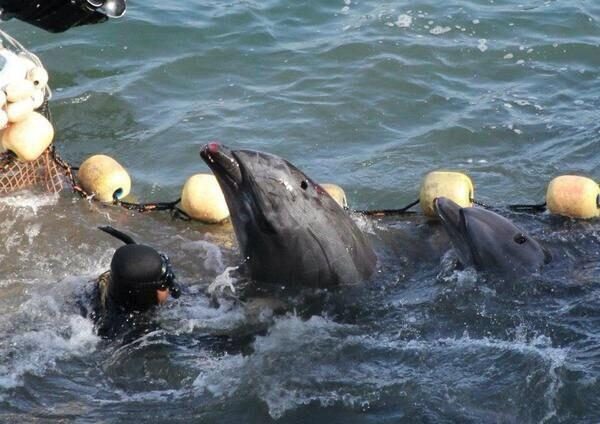 Dolphin tries desperately to save her baby. They were both killed #tweet4taiji #tweet4dolphins Stop Taiji Now ! http://t.co/OoRT5OAbwx