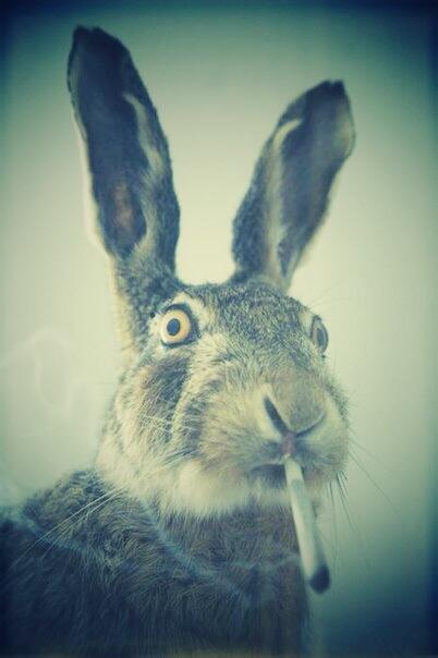 Картинки смешные про зайцев нет