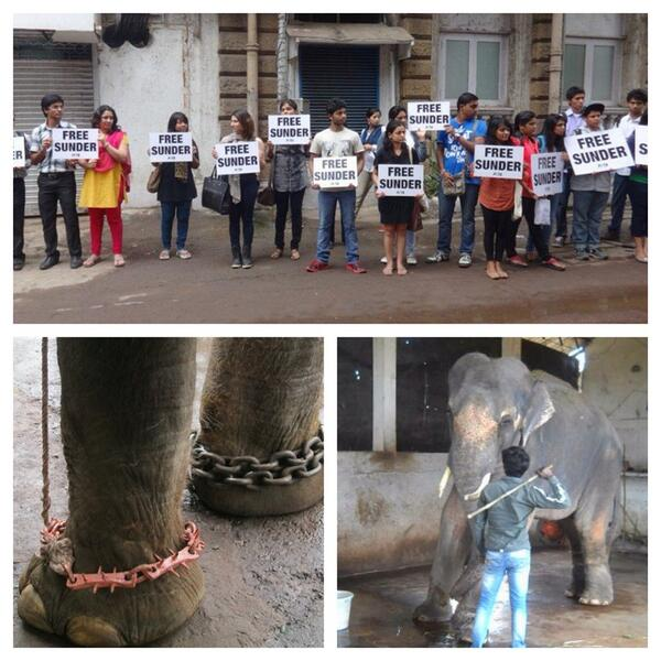 Please help us guys!! @PETAUK: Join those speaking out for this abused elephant! http://t.co/KqKcfPLtXa #FreeSunder http://t.co/DD8nNm3pE4""