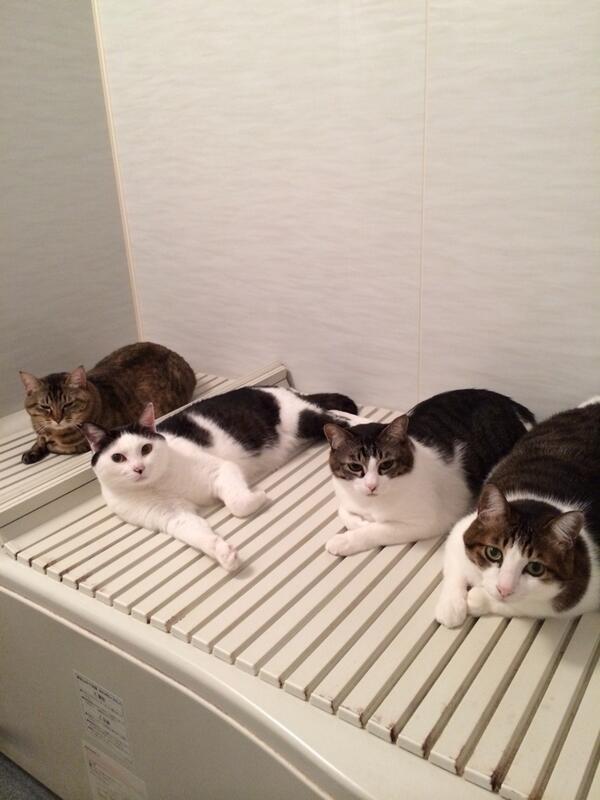お風呂が沸いた〜*(^o^)/*…と思ったらみんなが暖を取ってた(゚o゚;; pic.twitter.com/EMmPUoAVkc