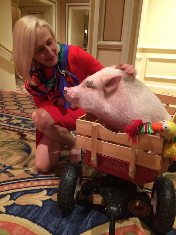 "PBS Pres. @paulakerger meets @ChrisPBaconPig before the #TCA14 session for @pbsnature's ""My Bionic Pet"" http://t.co/qJcW2V0k3V"