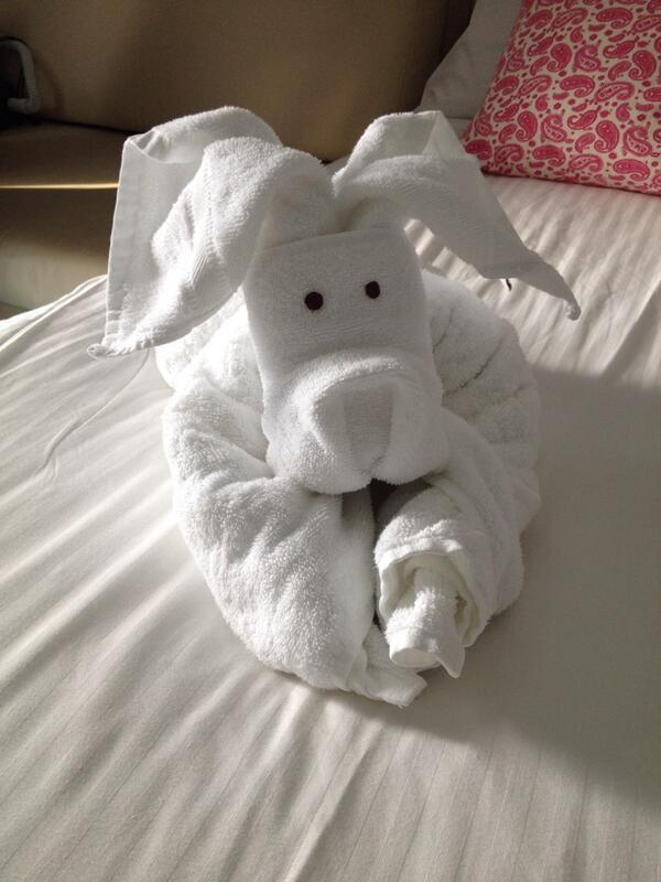 Our adorable turndown service from @CruiseNorwegian. #travel #cruisechat #doglover http://t.co/1B033fHIpg