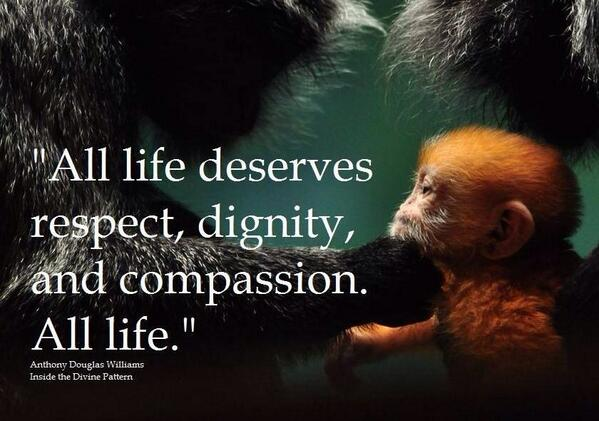 """@Peace2earth9: RT @deball3 @ARCrusade: Come on... It's only right. http://t.co/MJ8fyUeGtV"" #AnimalRights"""