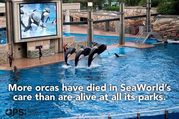 #Blackfish: Empty The Tanks @SeaWorld Captivity Kills. http://t.co/ivOS4MVRlZ